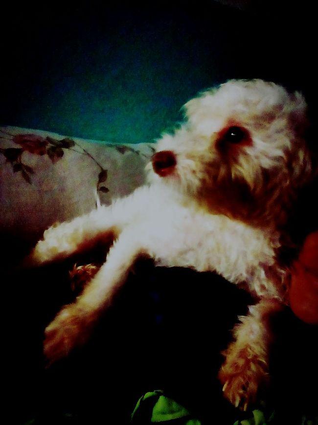 Dog Of Eyeem Dogs Of EyeEm Service Animals My Dog <3 Mii Guera ♥♡ Relaxing I Love My Dog