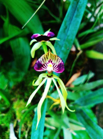 Mare Flower Nature Fragility Flower Head Freshness Beauty In Nature Passion Flower Beauty Nature Photography Nature_perfection Chiapas, México Flowers_collection Flors/ Flowers Flores Y Texturas Mexicolors Amazing Nature <3 Lovephotography  Movilephotography Flower Photography