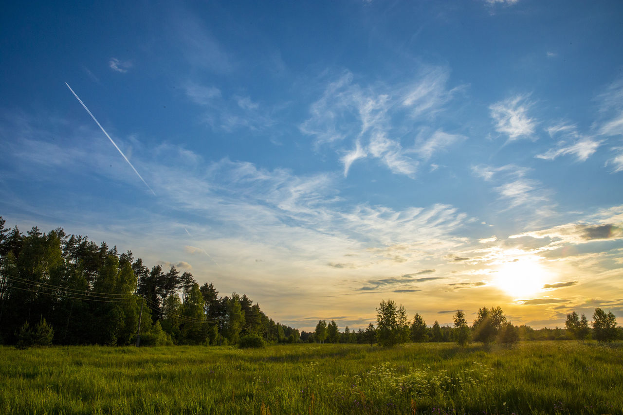 Agriculture Beauty In Nature Blue Day Field Grass Growth Landscape Nature No People Outdoors Rural Scene Scenics Sky Sunset Tranquil Scene Tranquility Tree Vapor Trail