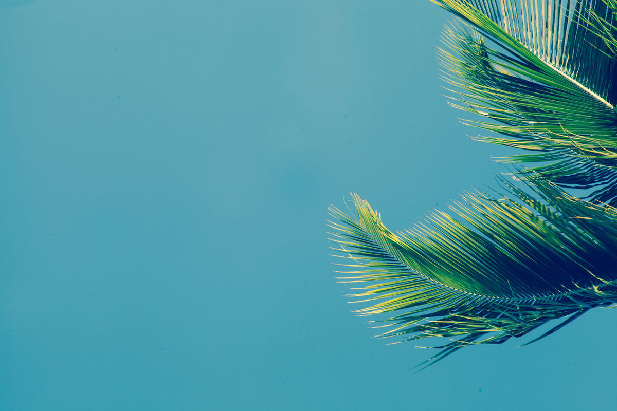 Beauty In Nature Blue Close-up Copy Space Day Green Color Nature No People Outdoors Palm Tree Palm Tree Leaves