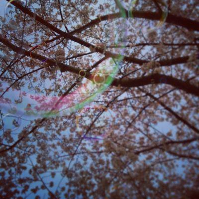 春ですな🌸 桜 プチ花見 春 学生会 役員研修会後シャボン玉熊本sakuragooddaynicenaturalactivejapankumamotospringsoapbubblewarmflowercherryblossomsky