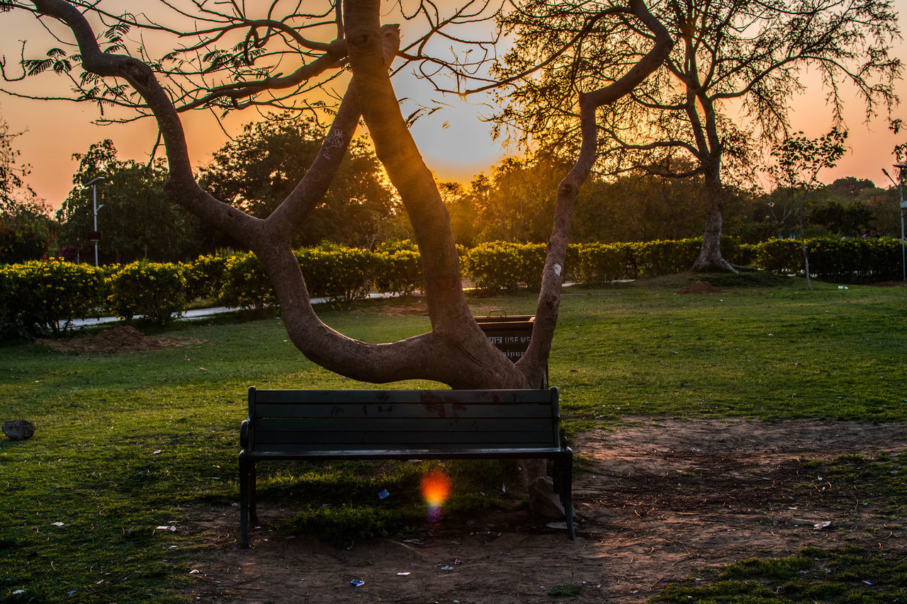Beauty In Nature Bench Day Dog Natural Parkland Nature No People Outdoors Sunset Tree