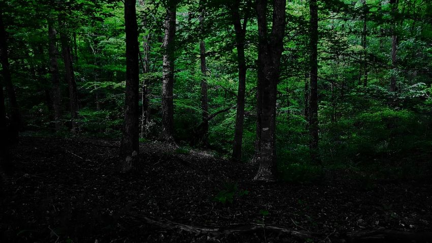 Dark Forest. PhotographybyTripp Smartphone Photography Phoneography Samsung Galaxy Note 5 Camera360Ultimate Pixlr Beastgrip Pro Forest Photography Nature_collection EyeEm Best Shots EyeEm Nature Lover Unique Style Creative Photography Creative Shots Mothernature
