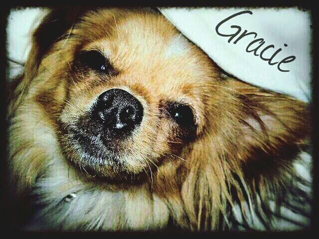 Dog Lover Dog Life Dog Love I Love My Dog