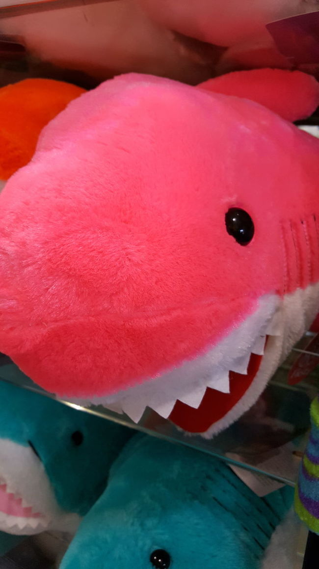 A shark's tale, waiting for the perfect moment to greet you with teeth. Spontaneous Moments Close-up Vibrant Color