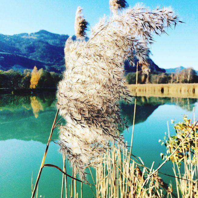 Inntal Inn Wasser Herbst Schilf Schöner Tag
