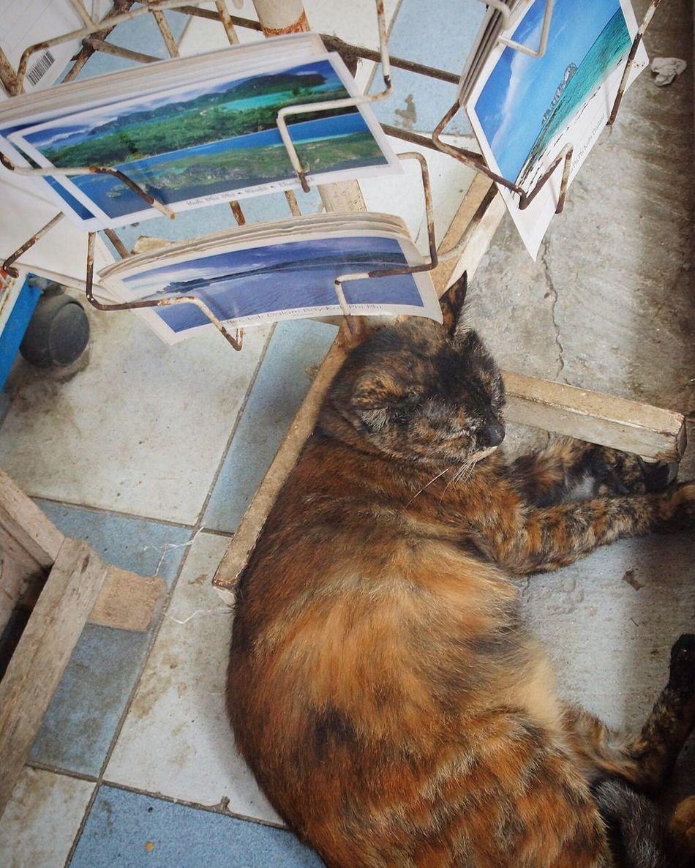 Sleeping postcat Postcard Postcards Postcardsfromtheworld Postcard View Cat Sleepingcat Cats Cat Lovers Cats Of EyeEm Thaïlande Thailand_allshots