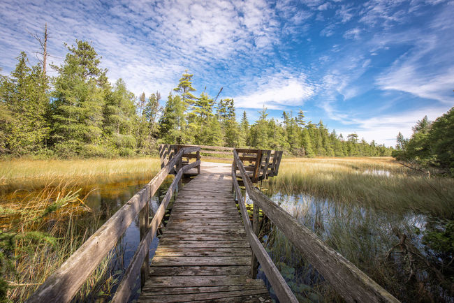 Beauty In Nature Boardwalk Calm Cloud - Sky Day Field Grass Grassy Growth Landscape Narrow Nature Non-urban Scene Outdoors Plant Scenics Sky Solitude The Way Forward Tranquil Scene Tranquility Tree Water Wood - Material Wooden
