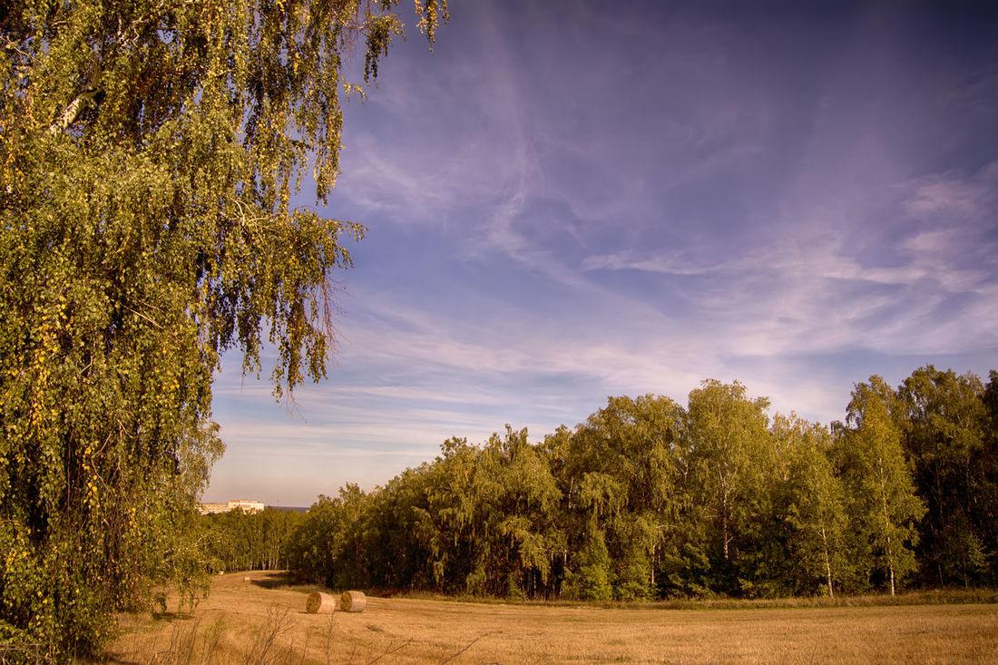 Atmosphere Autumn Belarus Belarus Nature Fall Beauty Field Fieldscape Landscape Majestic Mazyr Nature Tranquil Scene Tranquility Landscapes With WhiteWall