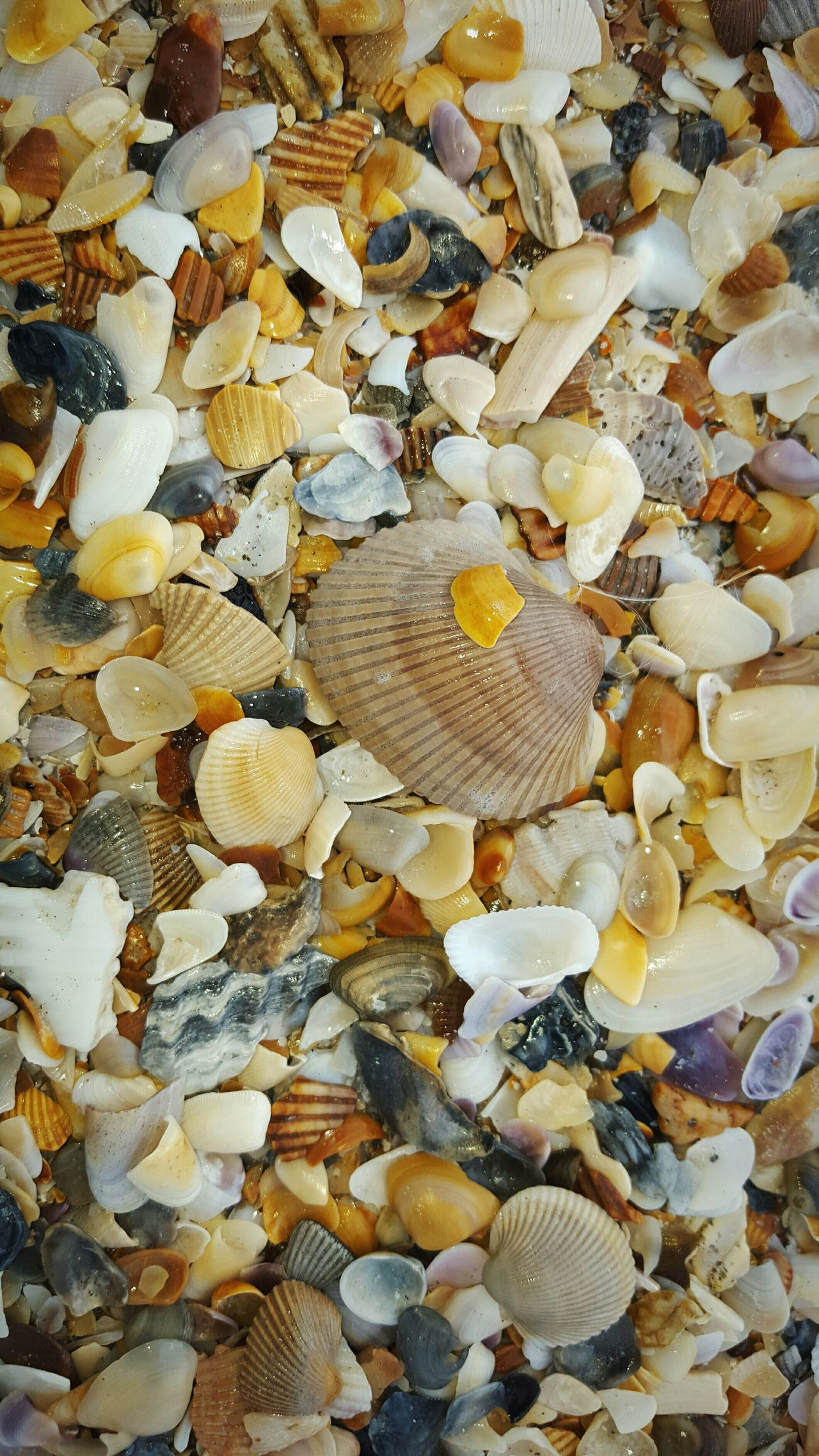 Large Group Of Objects Close-up Outdoors Shells Shellsheddyphotography Beach Oceanside Backgrounds Nature