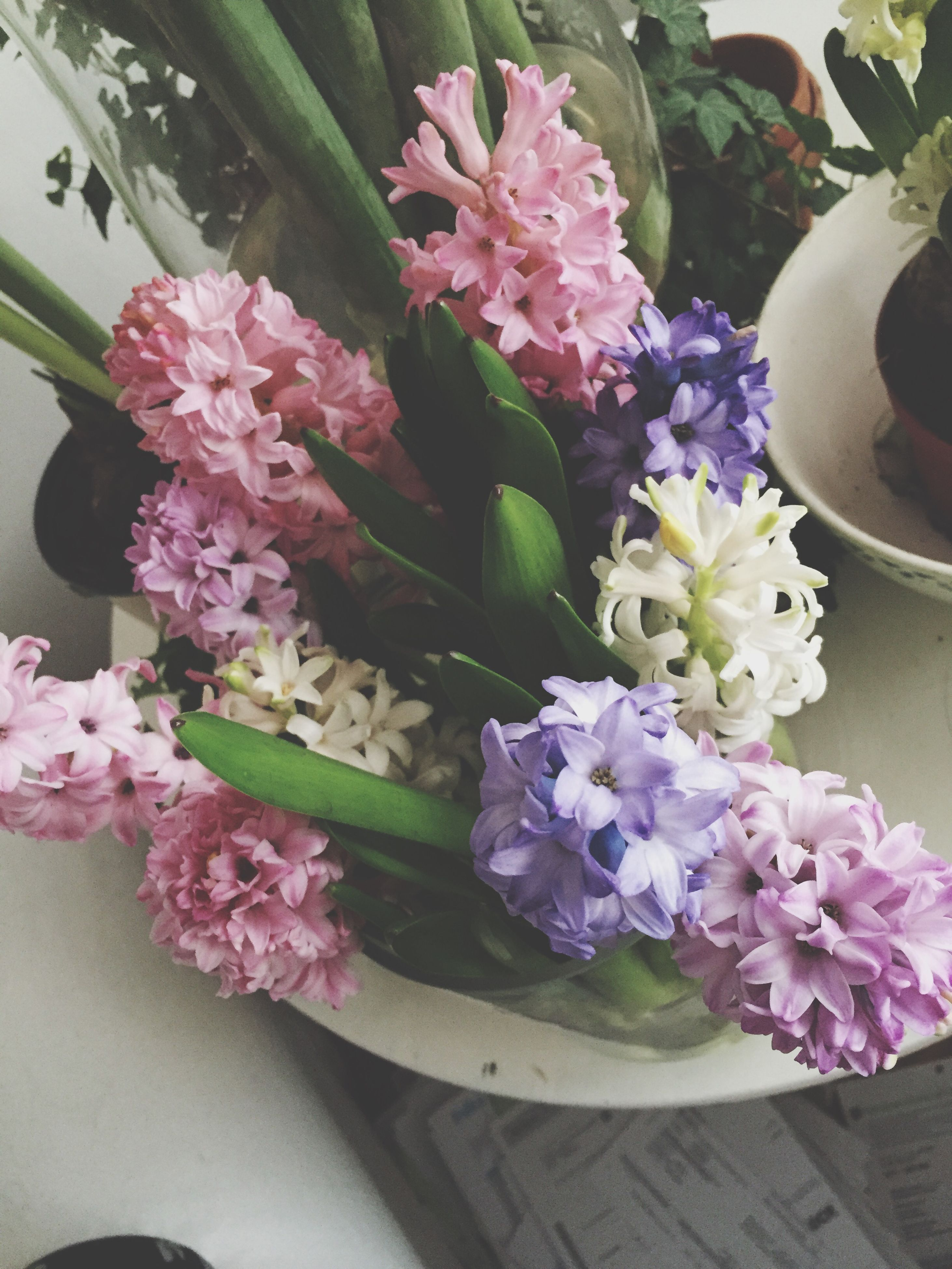 flower, freshness, fragility, petal, growth, beauty in nature, pink color, flower head, indoors, potted plant, plant, vase, bunch of flowers, nature, high angle view, close-up, blooming, leaf, bouquet, flower pot