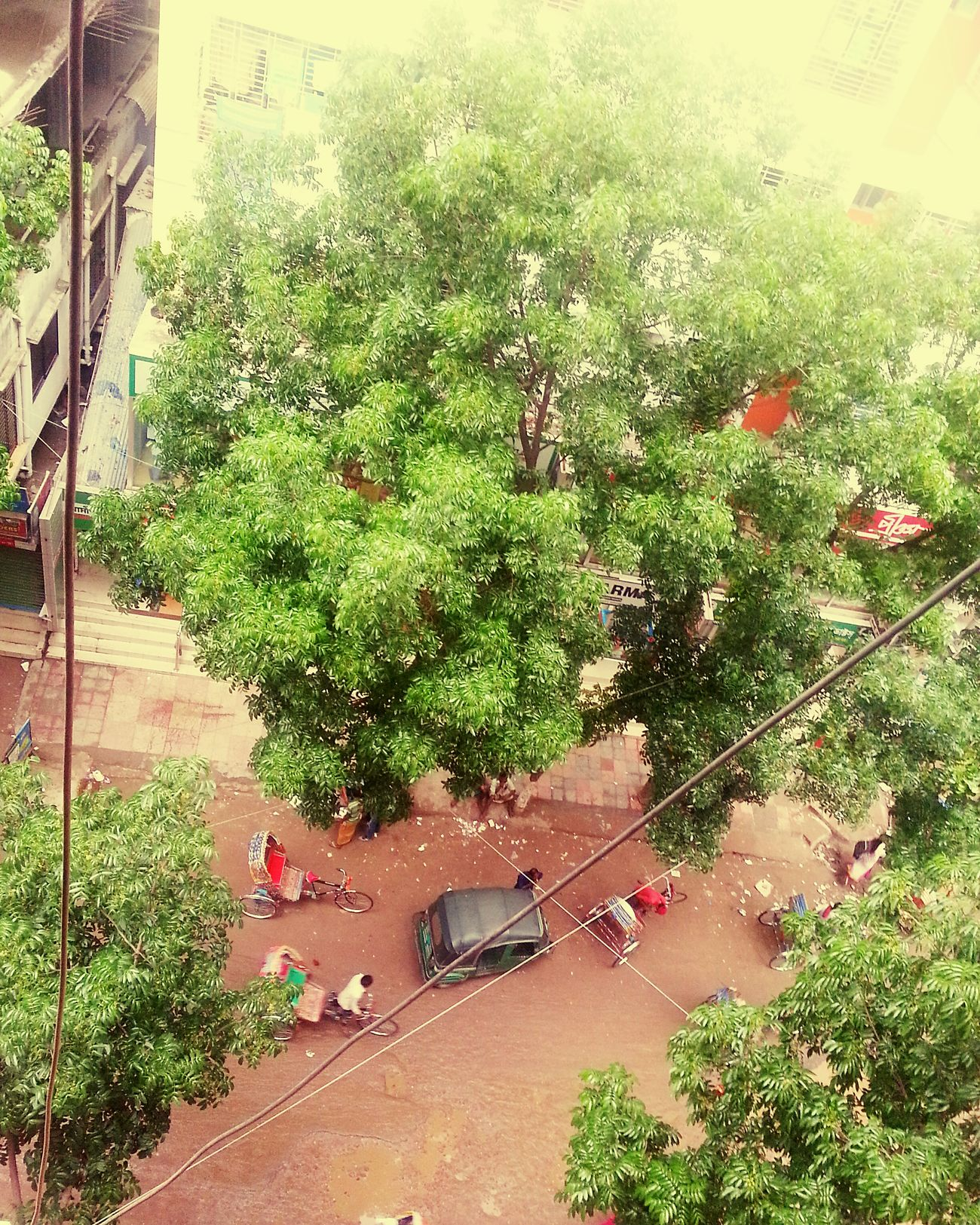 Sometime rain is the blessing from almighty . Bunch Of Leaves View From Top RainyDay Afterstorm  Eyemphotography Urban Nature Urban1 Fllter