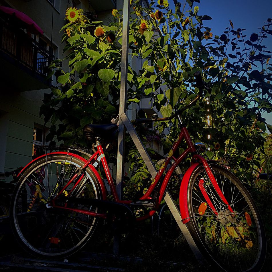 Streets of Berlin. Land Vehicle Bicycle Transportation Mode Of Transport Stationary Parking Parked Plant Berlin Streetsofberlin Streetstyle Redbike Wheel Cycle Growth Pole Creeper Plant Outdoors Green No People Day