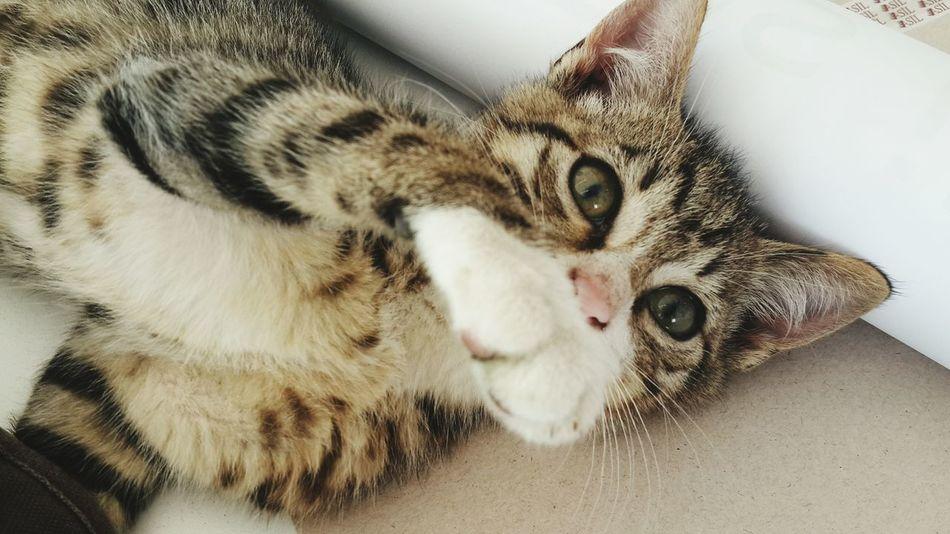 Ya versene sen şunu bi, bak zorla alırım yoksa Mimarsinanuniversity MSGSU Cats Istanbul Turkey
