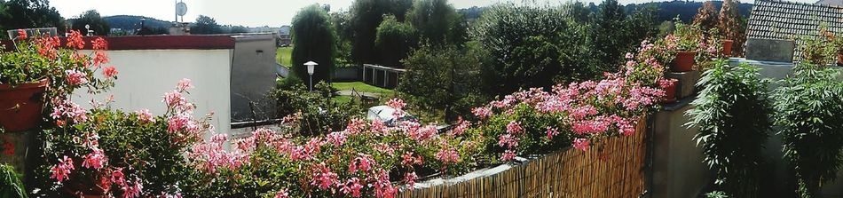 Our beatiful balcony 2015 🌸🌱 Balcony Panorama Relaxing Flowers,Plants & Garden Terrace Gardening Plagron SMOKE WEED EVERYDAY Chilling Out Czech Republic View From The Balcony