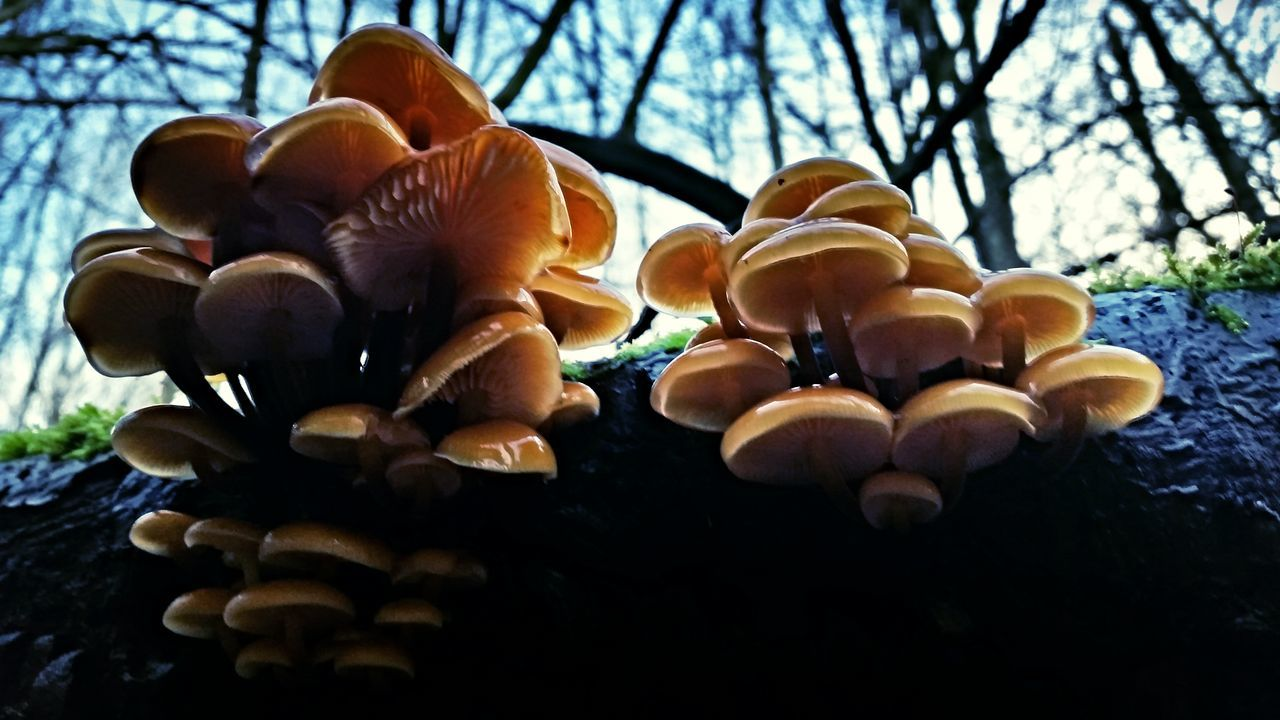tree, close-up, mushroom, no people, nature, toadstool, growth, fungus, low angle view, day, freshness, fragility, beauty in nature, outdoors, branch, food, fly agaric