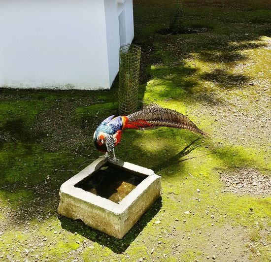 Taking Photos Enjoying Life Holiday And Relaxing Chech This Out Monte Brasil Azores, Terceira Aves Exóticas