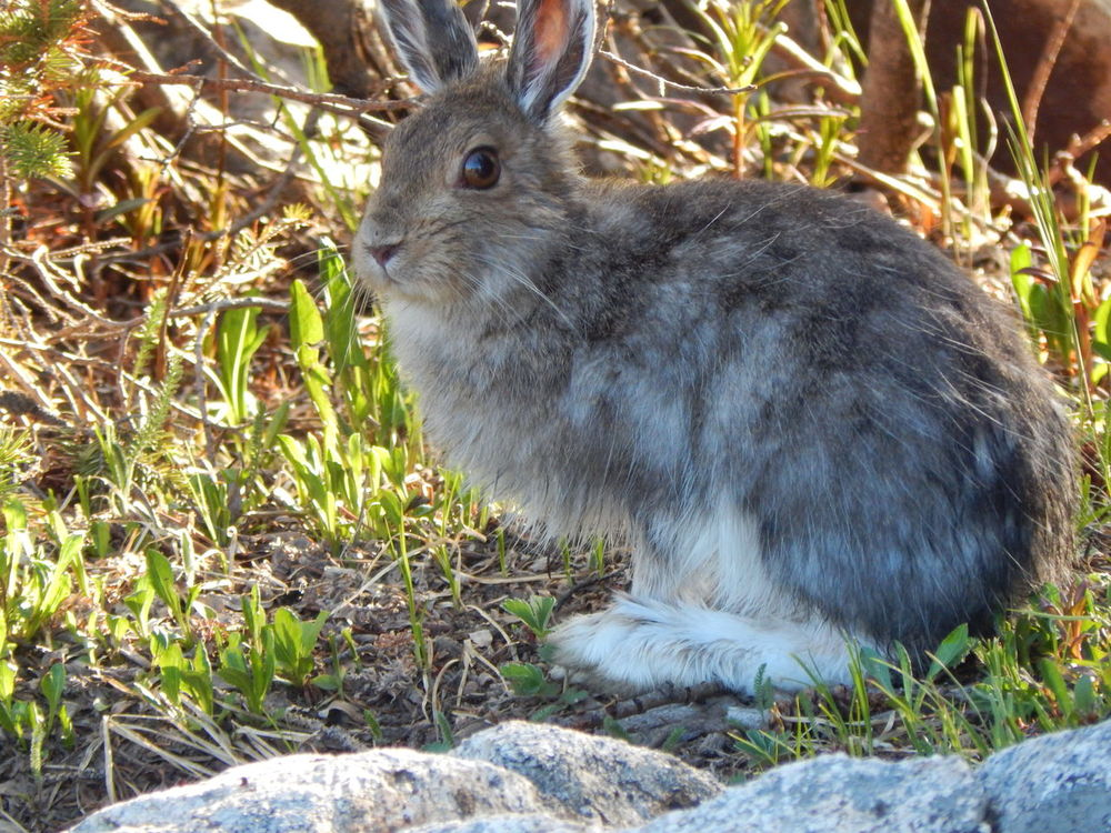 Lookit them feets! Hiking Animal Themes Animal Wildlife Animals In The Wild Close-up Grass Hare Nature One Animal Plant Wild Hare