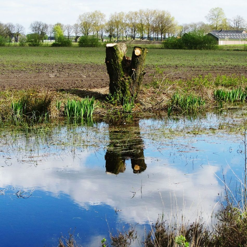 The felled tree stump - another view Tree Stump Pond Sunshine Reflections Reeds Agriculture Water Nature Outdoors Day Farm Trees Springtime