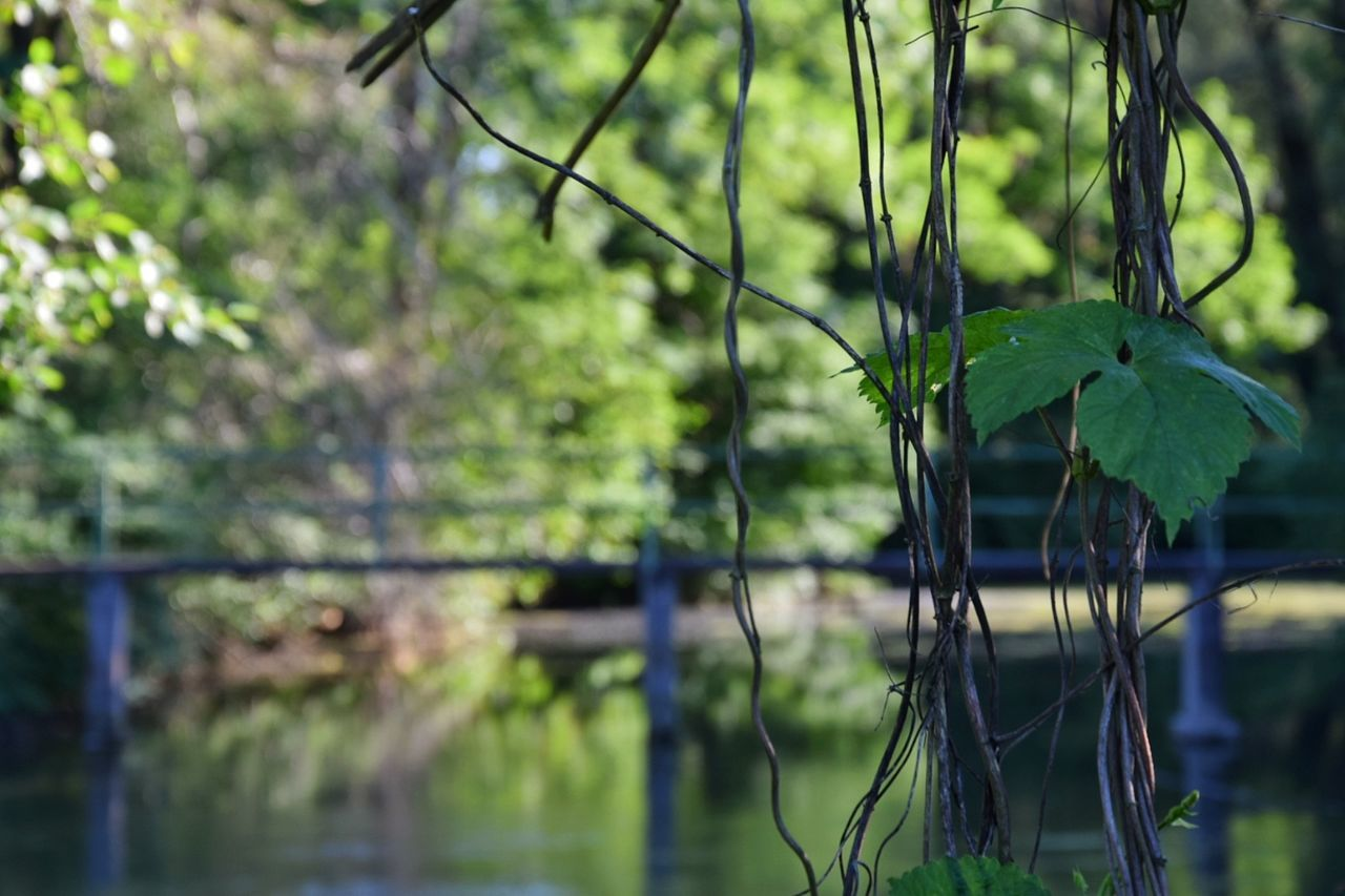 Nature Reflection Tree Water Lake Outdoors Day No People Beauty In Nature Branch Close-up