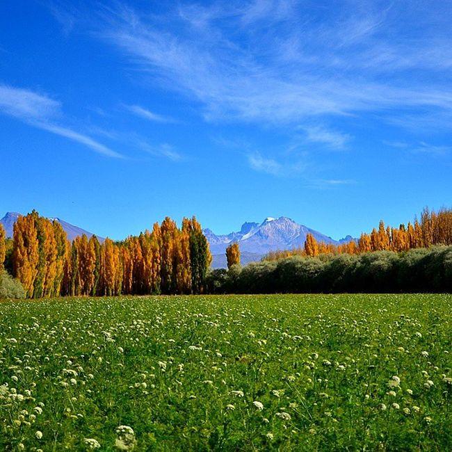 Campo de Zanahorias en el Sosneado Mendoza . Edge Of The World Argentina Field Green