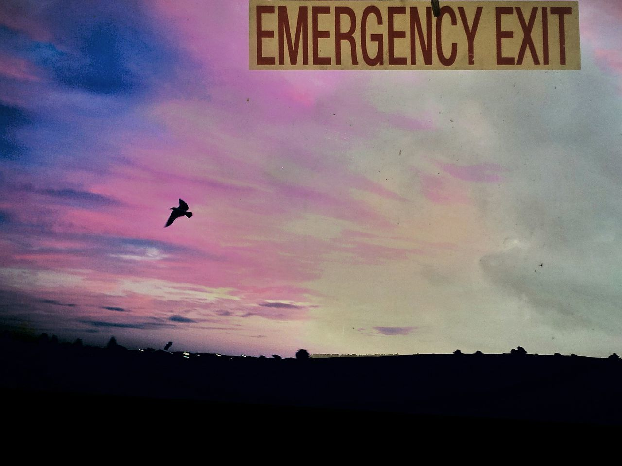 Flying Bird No People Animal Themes Outdoors Emergency Exit Escape Reality Escape From The City Exit Window Text Escape Hatch Taken For A Ride Exitsign Dramatic Sky Scenery Destination Windowview Window To The Soul Soul Searching Zen Mood Speeks To Me Lettering Idyllic Cloud - Sky