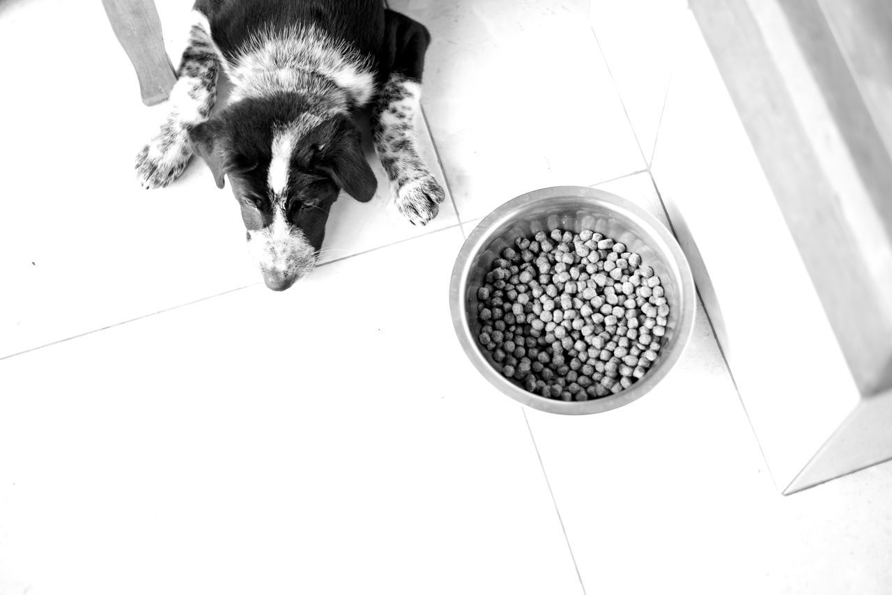 i love bali dogs Animal Themes Bali Bali Dogs Black And White Close-up Day Dog Dog Laying Next To Food Bo Domestic Animals Food High Angle View I Love Bali Dogs Kibble Mammal Monochrome No People One Animal Pets Place Of Heart Ubud