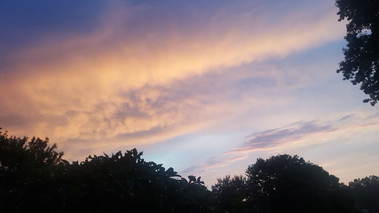 tree, sky, silhouette, sunset, nature, beauty in nature, cloud - sky, scenics, tranquility, low angle view, tranquil scene, no people, outdoors, growth, day