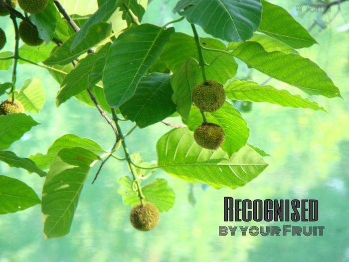 Love Of God Leaf Beauty In Nature Freshness