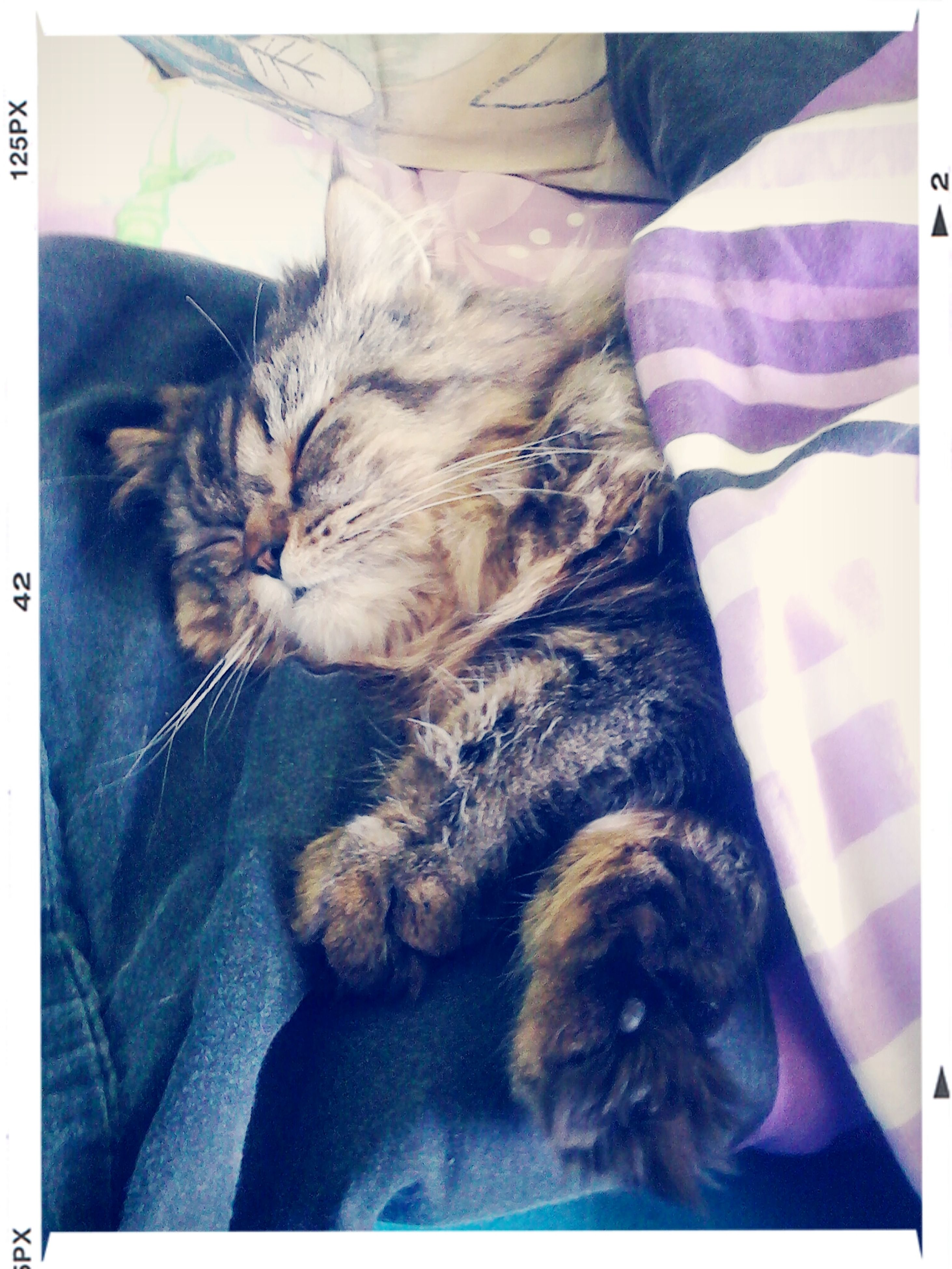 pets, domestic animals, mammal, domestic cat, animal themes, indoors, one animal, cat, relaxation, feline, transfer print, sleeping, resting, lying down, bed, auto post production filter, eyes closed, whisker, home interior, high angle view