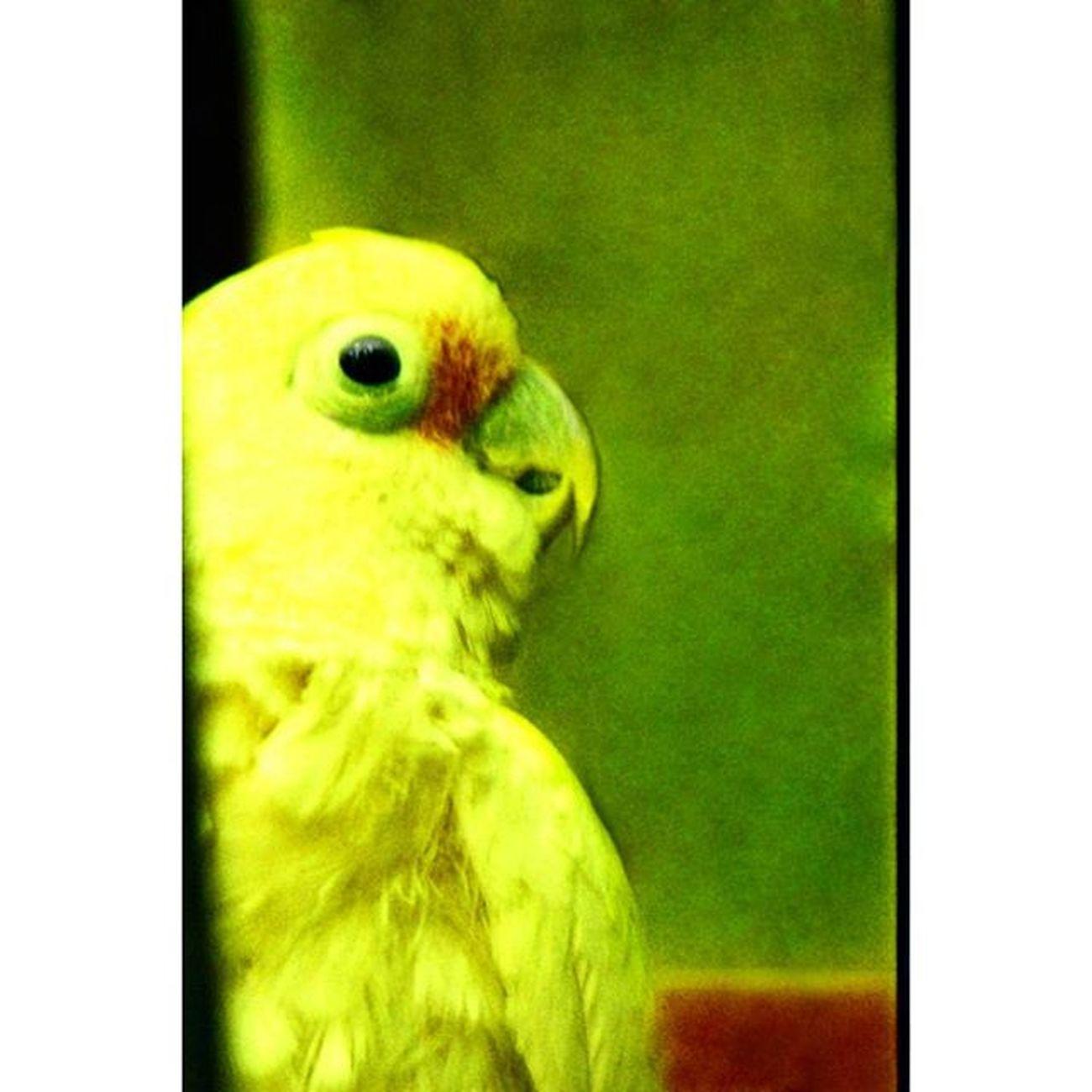цветвинтерьере цветныекартинки Film Filmfoto 35mm Analogphotography Art Photoart Decor