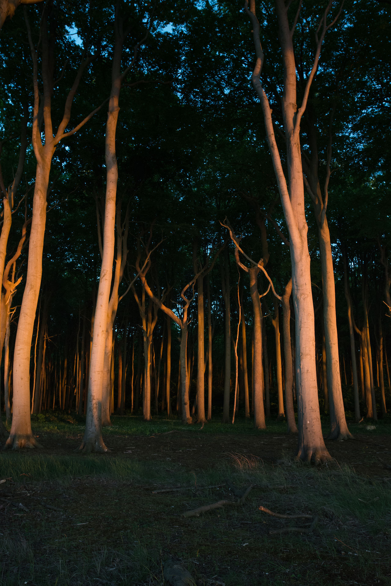 Beauty In Nature Branch Forest Gespensterwald Growth Landscape Nature Nienhagen Germany Night No People Outdoors Tranquility Tree Tree Trunk