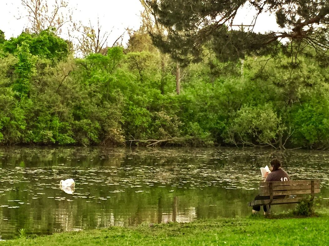 People Watching Relaxing Hinespark Swans