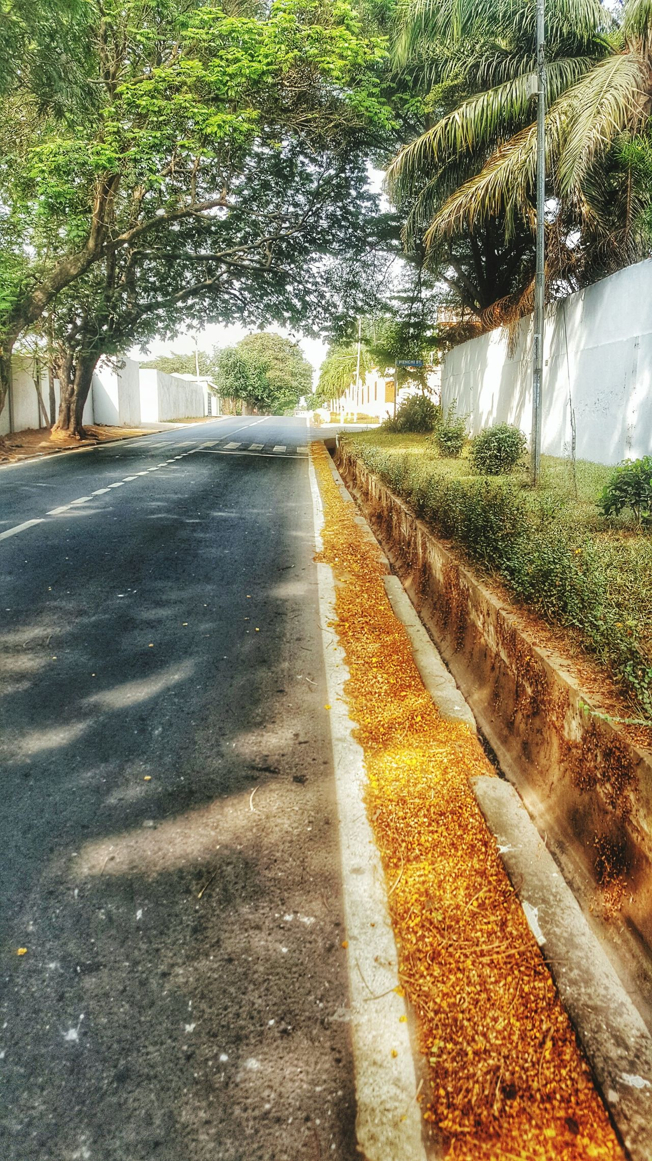 Exploring the (new) hood with Snapseed... Outdoors No People Sunlight Tree Shadow Beauty In Nature Road The Way Forward Nature EyeEmNewHere Nature_collection