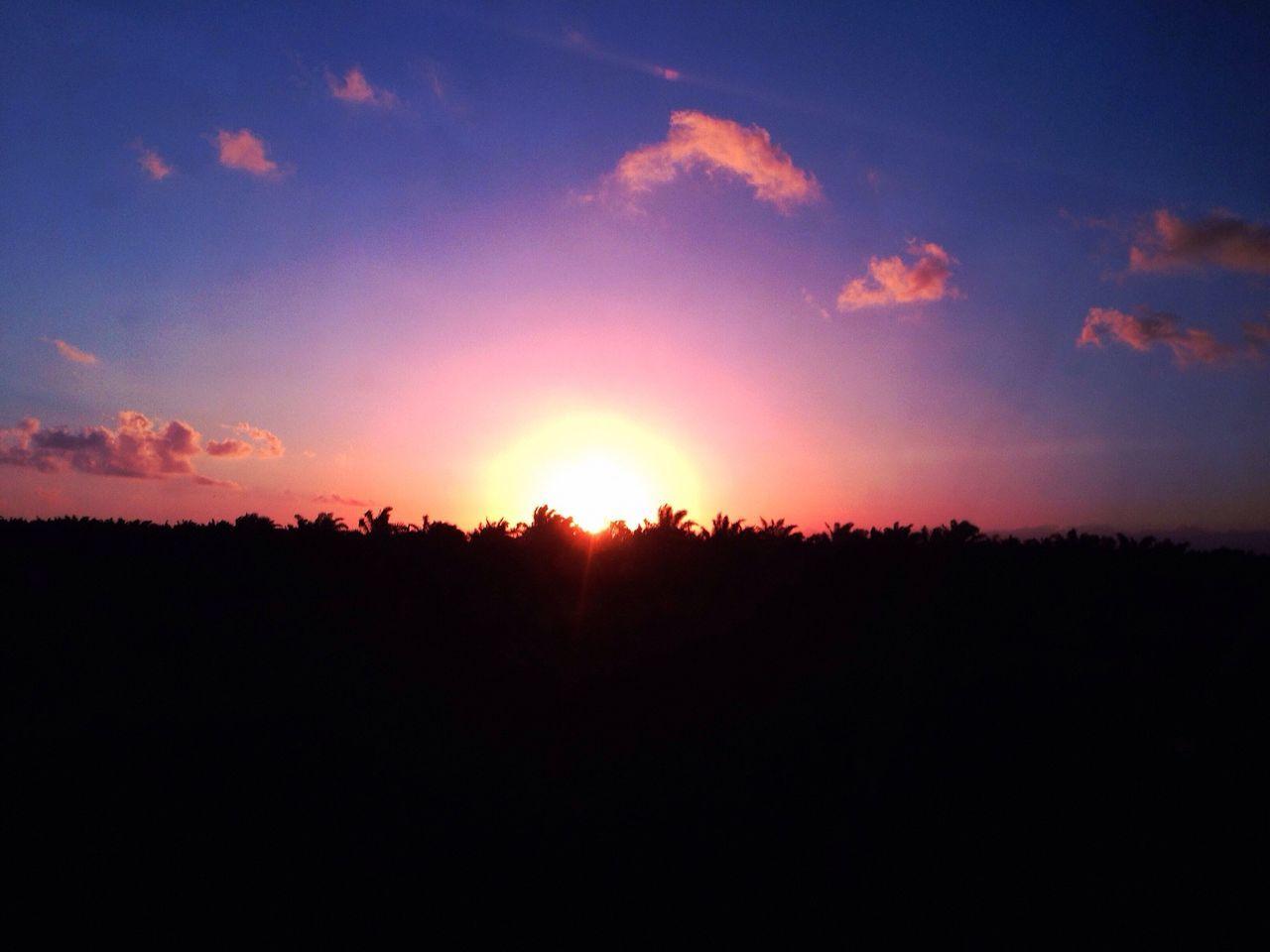 Sunset Untuk Yang Kesekian Kalinya Blue Sky Kebun Kelapa Sawit Tanah Bumbu Bumi Bersujud Kalimantan Selatan INDONESIA EyeEm Indonesia