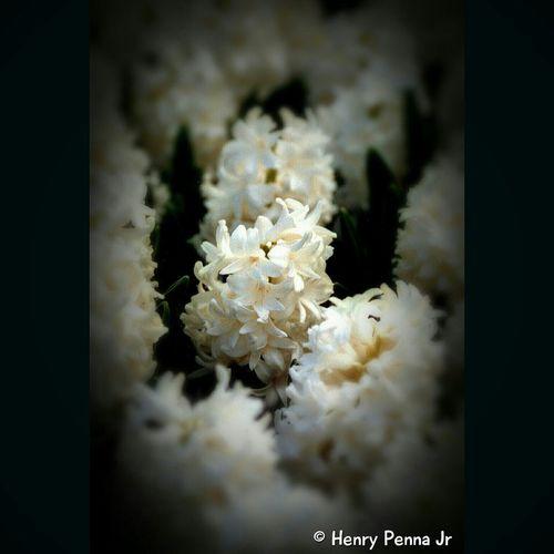 Flower Minolta Flowers Film Is Not Dead 35mm Keukenhof Keukenhof Garden Garden