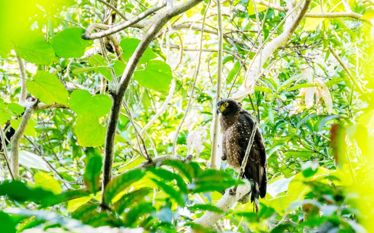 Bird Animal Animal Wildlife Wildlife Nature Low Angle View Beauty In Nature Green Color One Animal Unique Perspectives Unique Artistic Composition Artistic Photo Birdwatching Birds Of EyeEm  Birdporn Birding Bird Photography Outdoors Philippines Pilippines Bird Philippine Serpent Eagle Eagle Eaglephotography Eagle Portrait