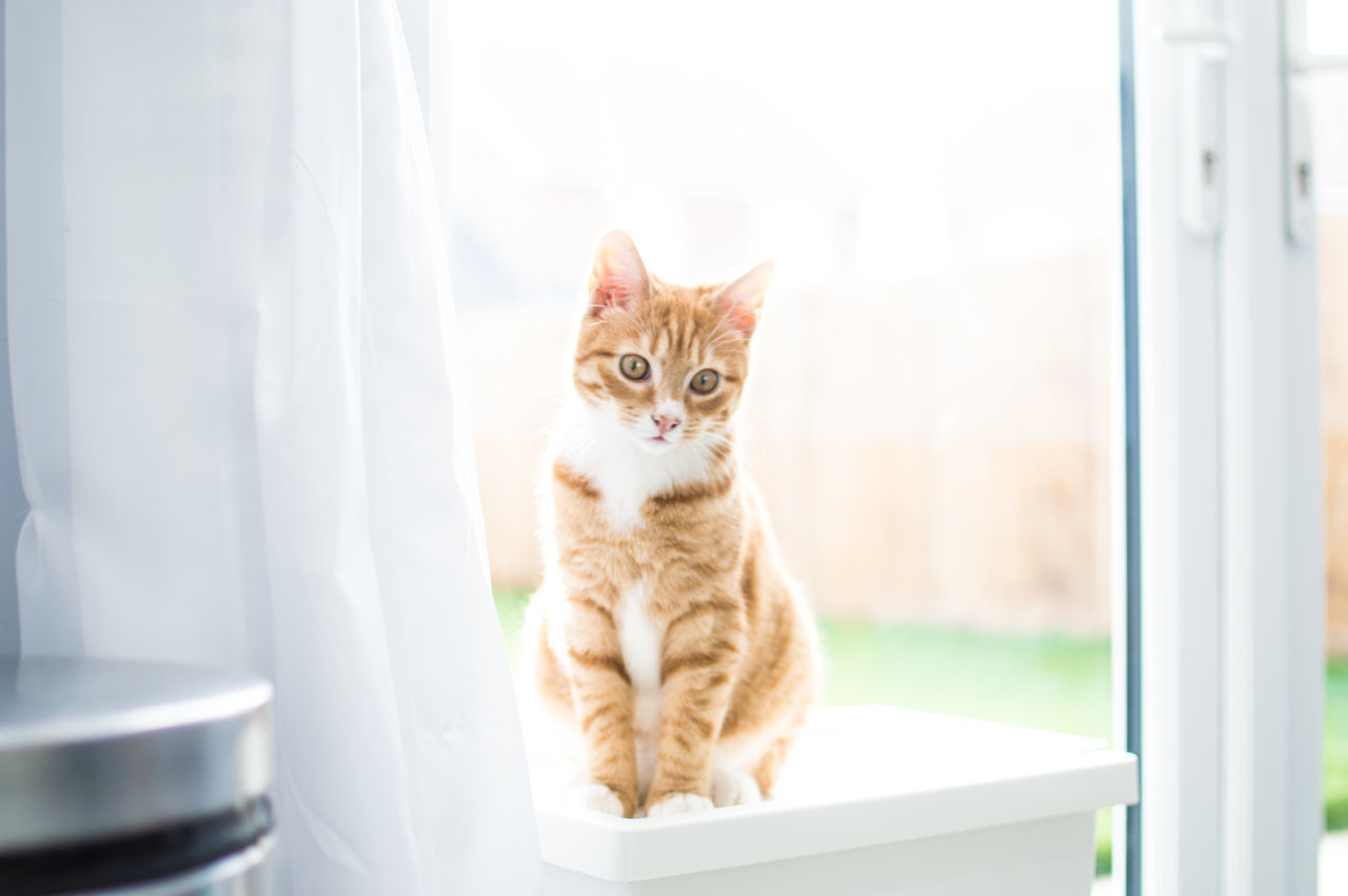 Alertness Animal Themes Cat Domestic Animals Domestic Cat Feline Home Home Sweet Home Home Sweet Home ♥ Kitten Kittenoftheday Kittens Kittensofinstagram Looking At Camera Mammal One Animal Pets Playful Playful Kitten Playful Kittens Playful Kitty Portrait Relaxation Sunlight Whisker