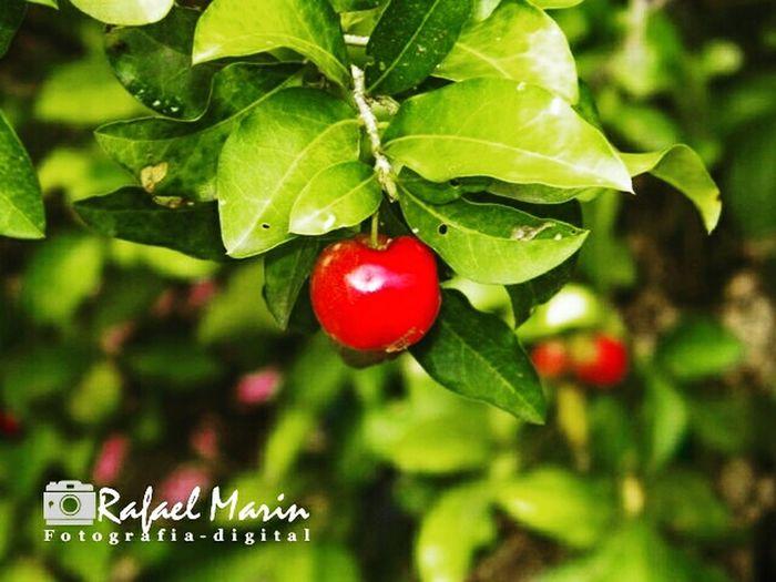 Semeruco fruto dulce Close-up @rm_fotografia_1984
