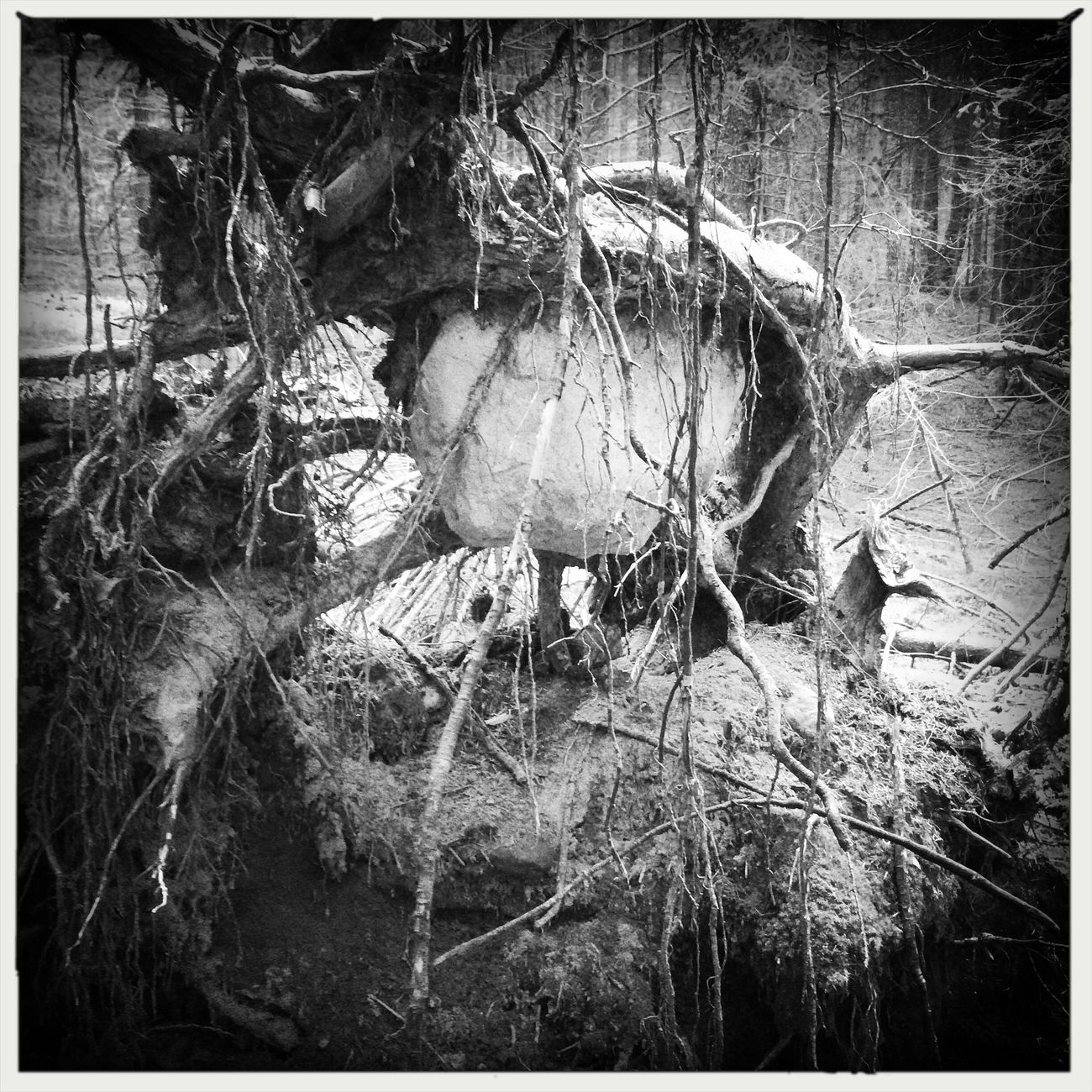 A big stone in the roots Blackandwhite Hipstamatic Roots