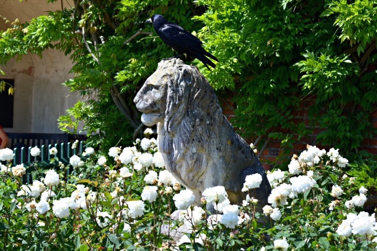 Lion Statue Photo Crow