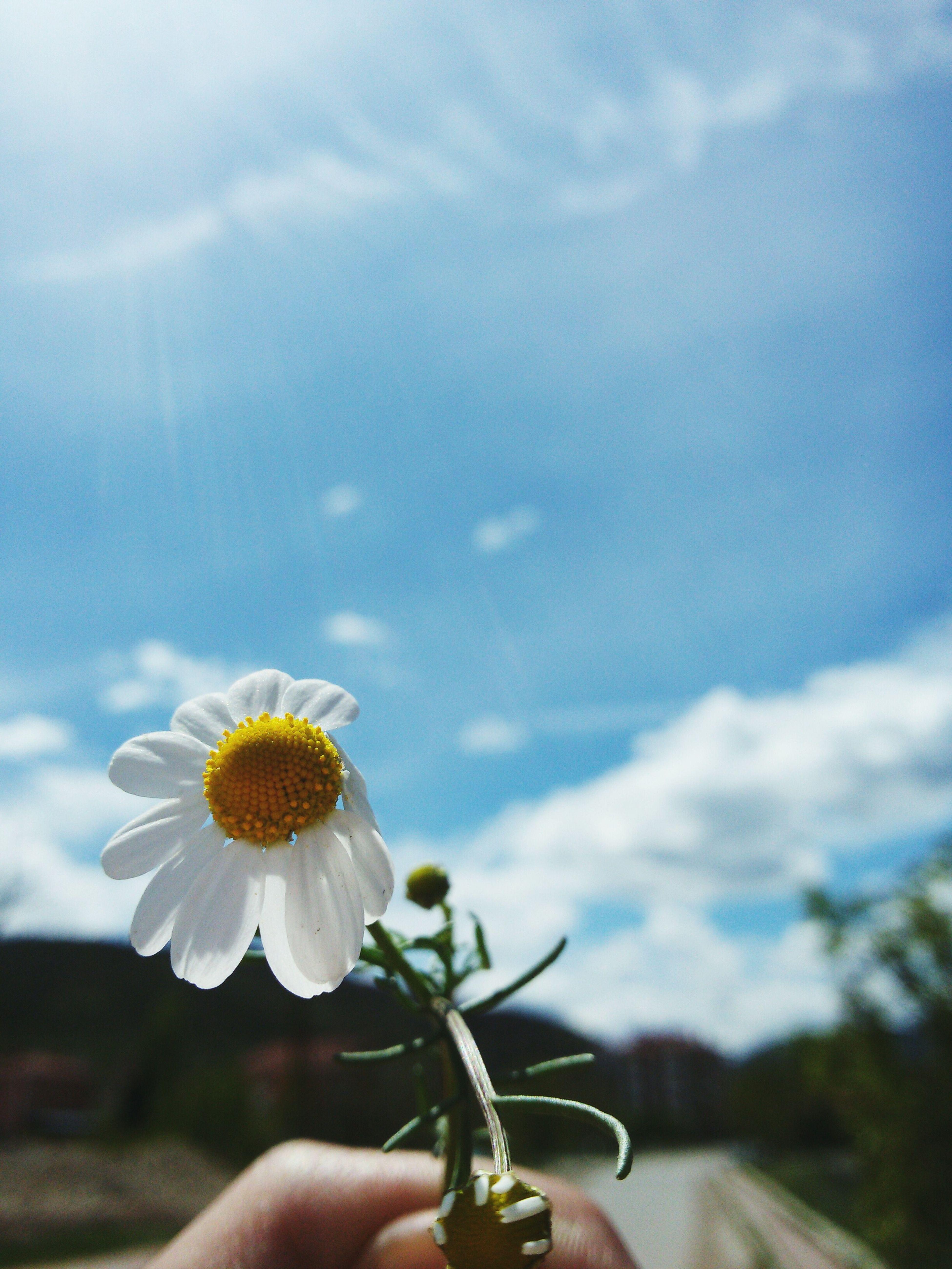 Sun Whatabeautifulday Sippin'on Sunshine! Papatya Gökyüzümavisi Ensevdigim