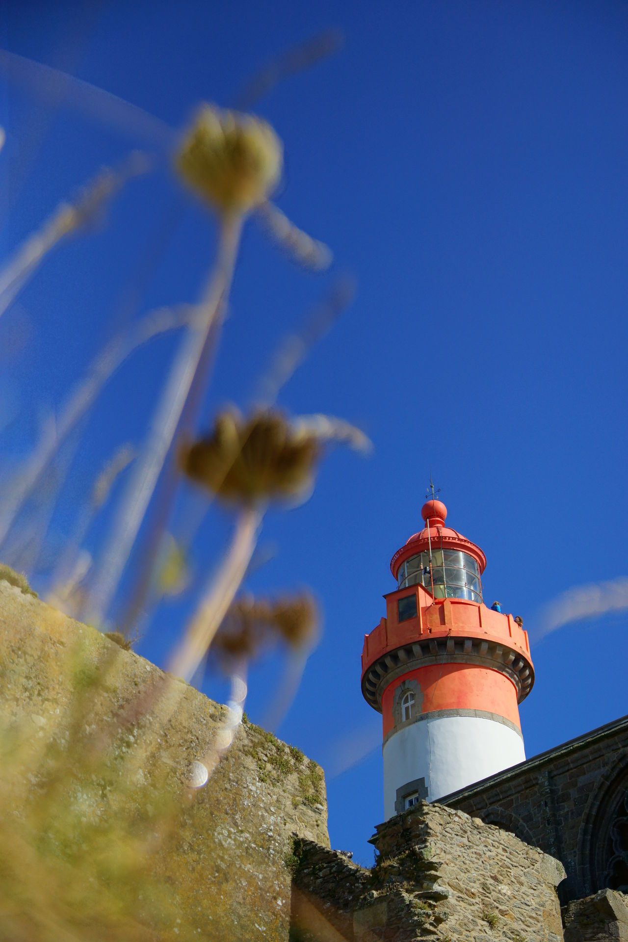 Saint Mathieu Lighthouse with Sea Thrifts Architecture Blue Blue Sky Brittany Building Exterior Built Structure Clear Sky Day France Landmark Lighthouse Low Angle View Maritime Maritime Photography Nature No People Outdoors Ruin Saint Mathieu Saint Mathieu Lighthouse Sea Thrift Selective Focus Sky Summer Wall
