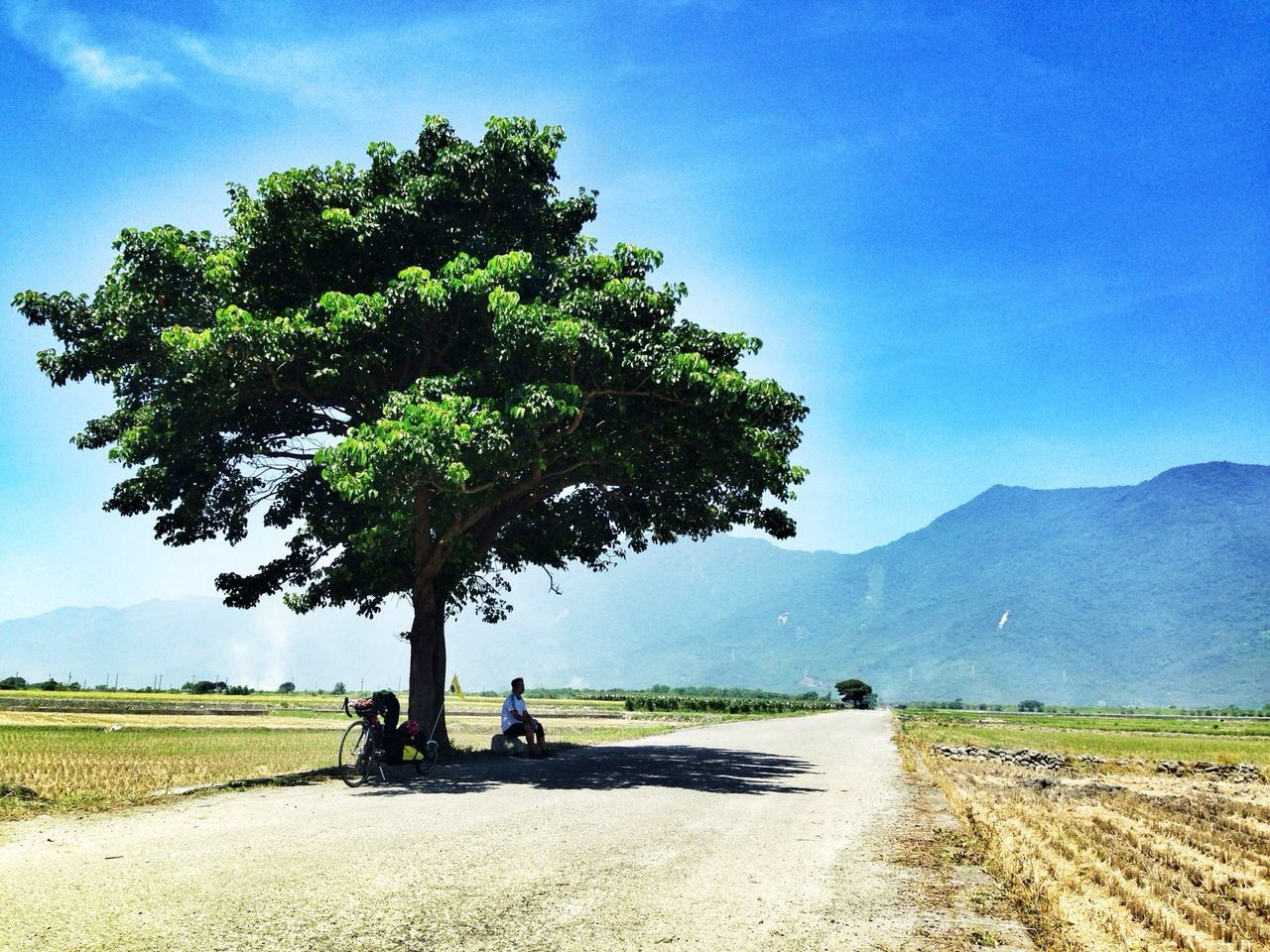 Man Sitting Under Tree On Road Against Mountains