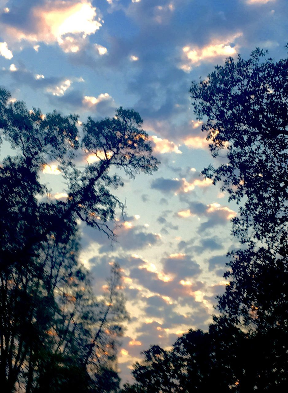 sky, tree, low angle view, sunset, cloud - sky, silhouette, nature, beauty in nature, tranquility, growth, no people, scenics, outdoors, day