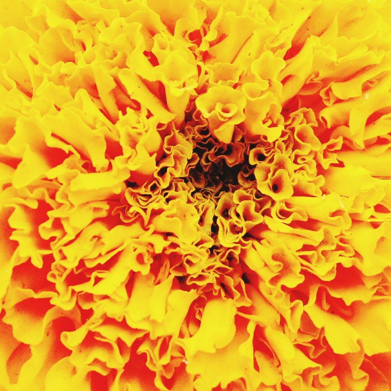 Full Frame Backgrounds Yellow Flower Fragility Close-up Extreme Close-up No People Textured  Flower Head Nature Freshness Studio Beauty In Nature Day Outdoors