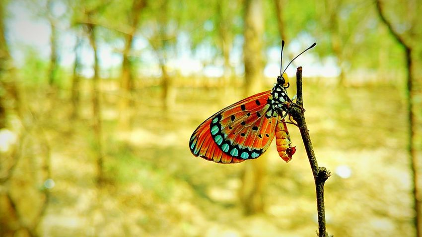 Wood Nectar Butterfly Nature Moto X Play