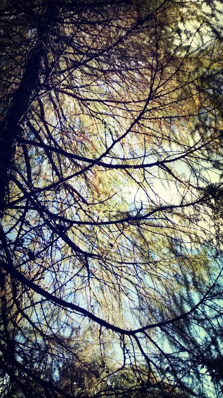 tree, nature, branch, outdoors, low angle view, tranquility, day, no people, beauty in nature, backgrounds, bare tree, growth, full frame, forest, sky, close-up