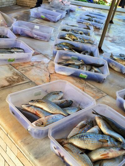 Fish Seafood In A Row Food Food And Drink Raw Food Fishing Fish Market Freshness No People Large Group Of Objects Healthy Eating Outdoors Day