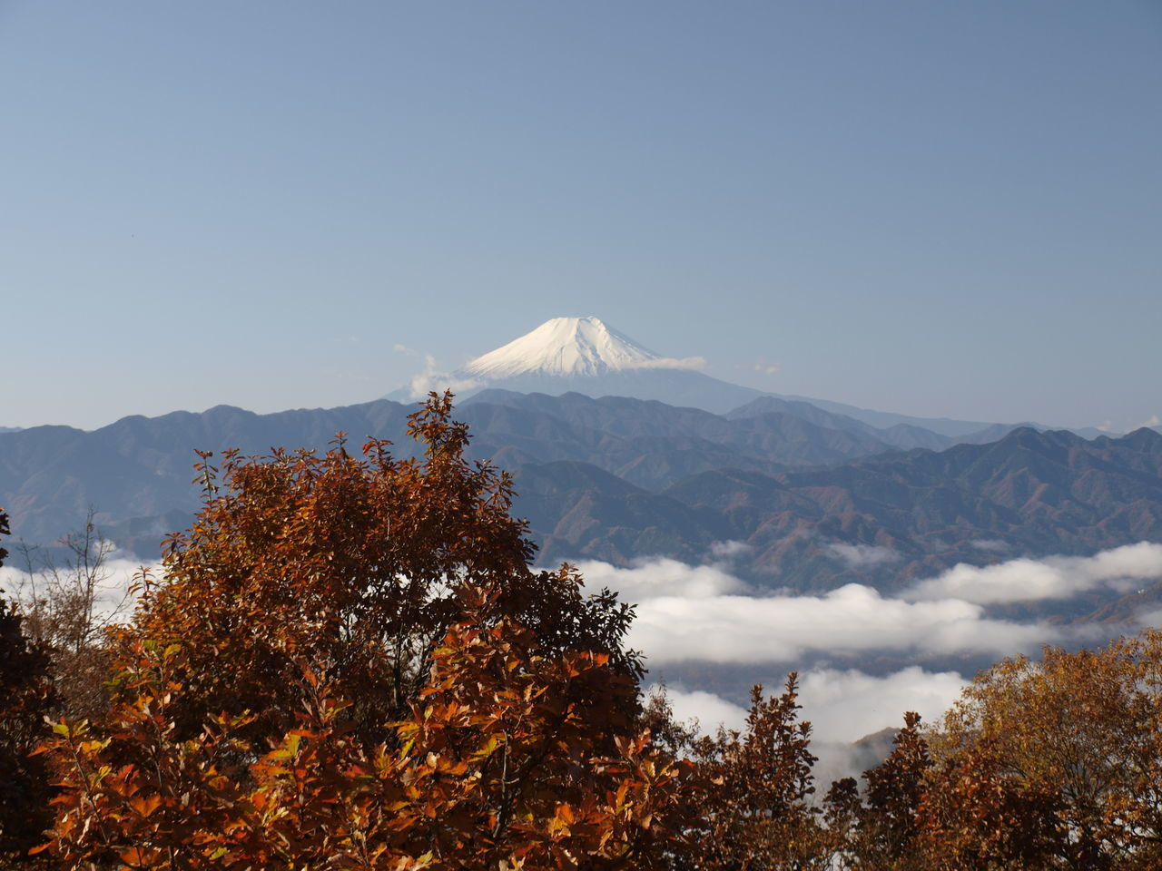 Trekking Takao Mountain Yellow Mountain Jinba Mountain Beautiful Hiking Red Japan Outdoors Sightseeing Momijigari Autumn Colors Momiji Mt.Fuji Autumn Autumn Leaves Countryside Nature Walking Sky Tree Green Activity